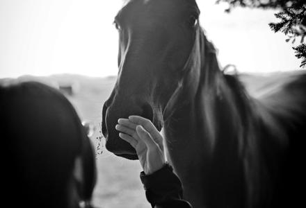 photo noir et blanc d'une femme caressant les naseaux d'un cheval